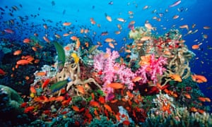 A healthy coral reef such as this one provides shelter for huge numbers of animals, but more frequent bleaching events are threatening the resilience of many reefs and their capacity to recover.