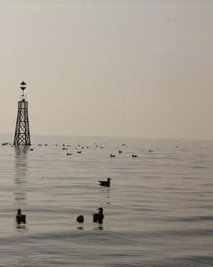 Birds on the sea
