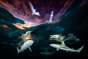 sharks and sky with gulls above