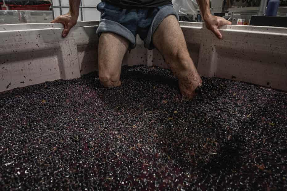 """Bandesh punches down Shiraz grapes for his """"Time To Fly"""" wine in Mac Forbes' winery, in Healesville, Australia, on March 13 2021."""