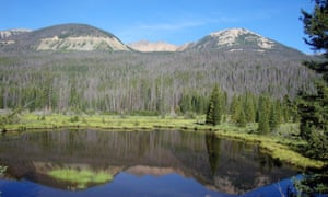 Thousands of trees killed by mountain pine beetles in western Rocky Mountain national park.