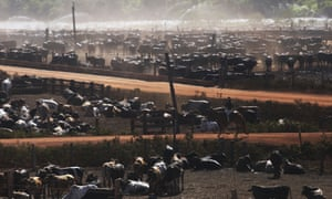 Bulls in a cattle feed lot in the Amazon on 28 June 2017 near Chupinguaia, Rondonia state, Brazil.