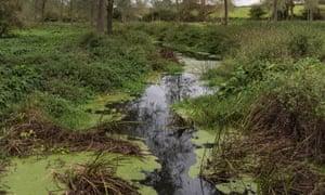 Blooms of algae on the river Blackwater in Essex