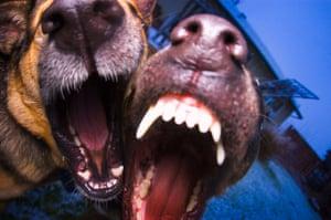 Former Burglars Say Barking Dogs And Cctv Are Best Deterrent