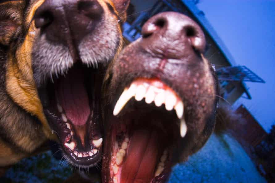 A pair of barking dogs