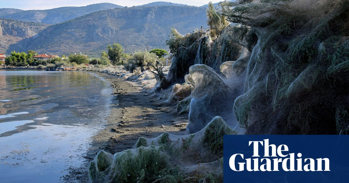 Giant spiders' web covers Greek beach | World news | The Guardian