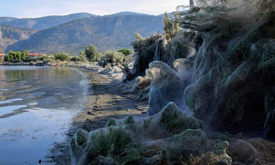 The huge cobweb covering the beach along the coast of Aitoliko in Greece.