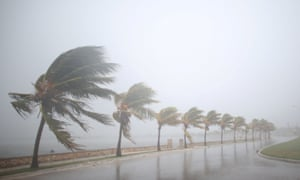 Palm trees sway in Caibarién, Cuba, before Irma arrived.