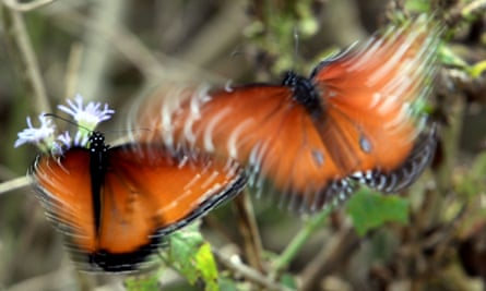 Butterflies flutter as they take nectar from native plants at the center.