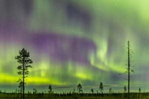 The aurora borealis dance across the sky over the remains of an old-growth forest
