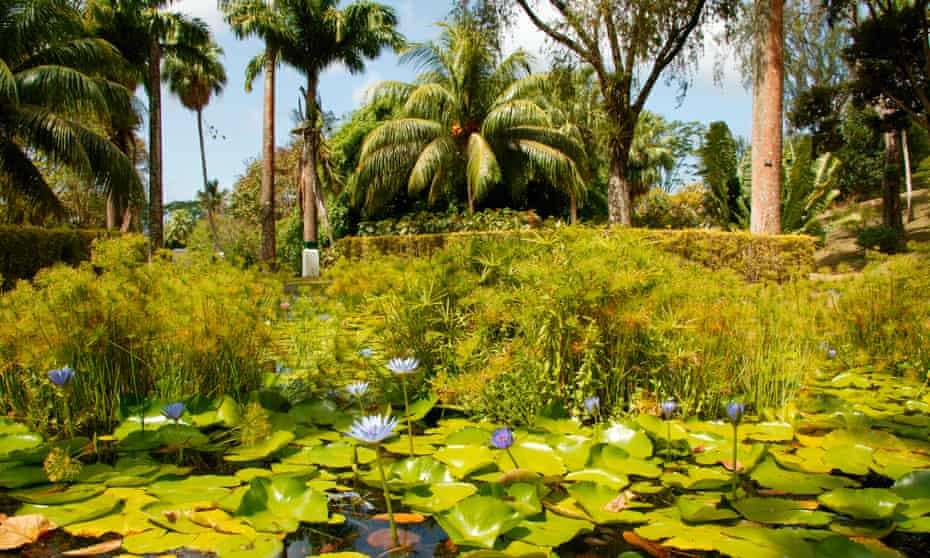View of a pond covered in lily pads and plant life, Kingstown, St. Vincent