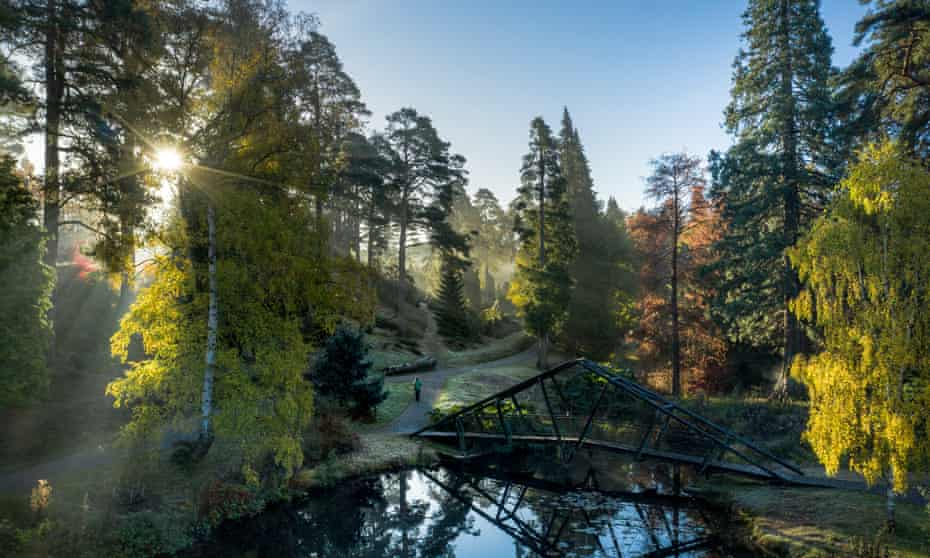 Bedgebury Pinetum and Forest in November