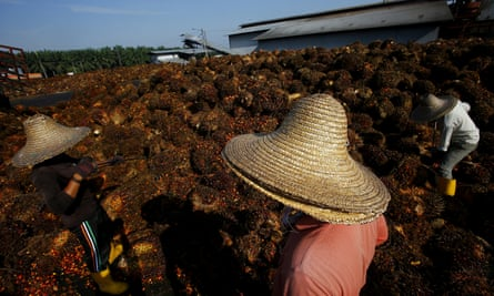 Workers collect palm oil fruit in Sepang, outside Kuala Lumpur.