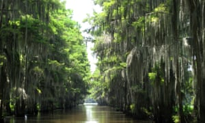 A water lane running through tall cypress trees on Caddo Lake, Texas.