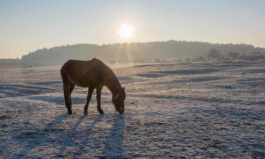 A horse grazes in the New Forest, Hampshire, where temperatures dropped below freezing overnight.