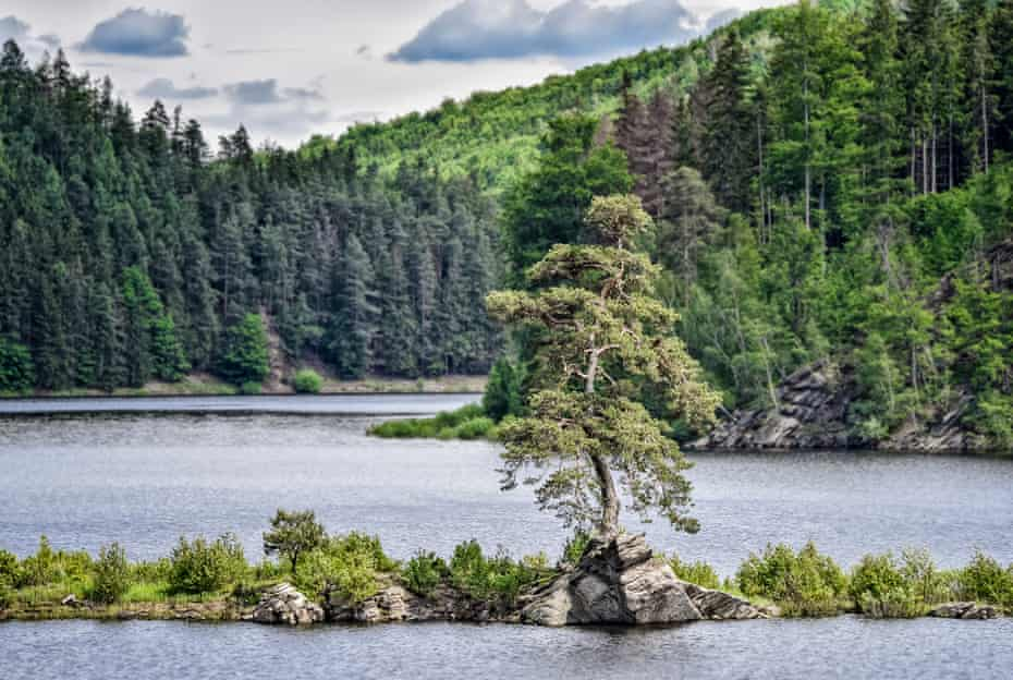 The Guardian of the Flooded Village has grown for 350 years on a rocky height near the village of Chudobin