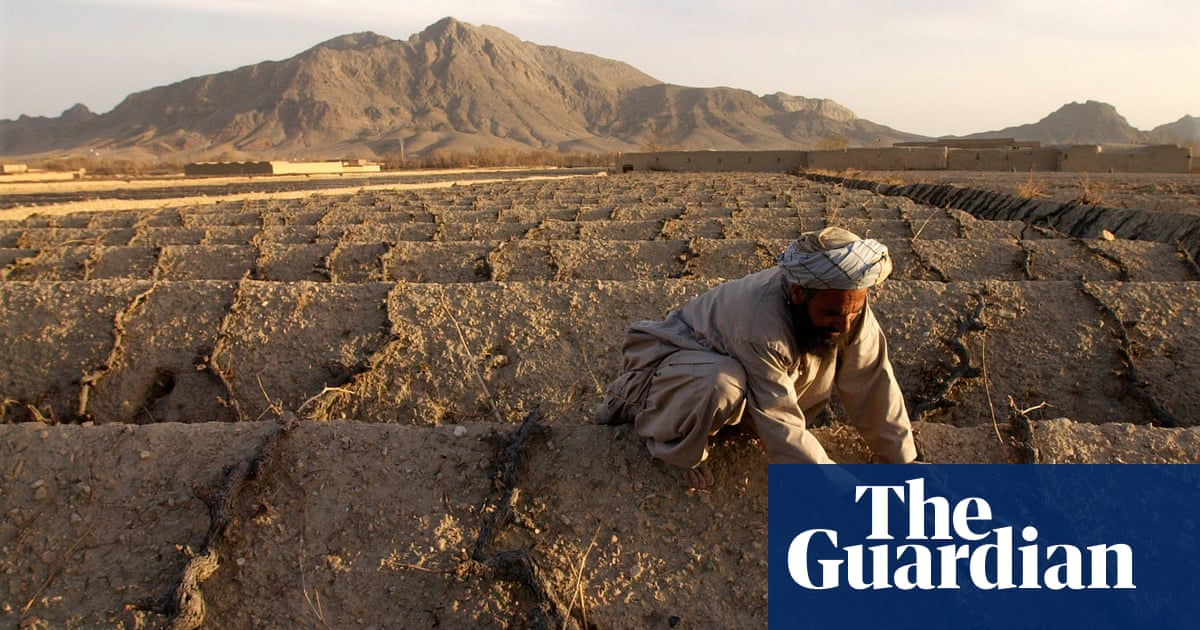 'The challenge for us now is drought, not war': livelihoods of millions of Afghans at risk