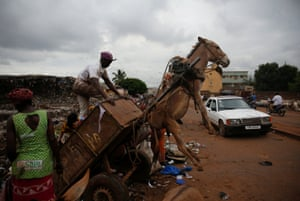 Bamako, Mali. A donkey is tipped in to the air as a waste picker unloads rubbish from his cart