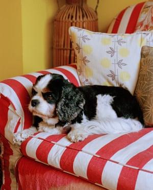 Lucinda Chambers' dog, Digby.
