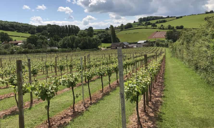 The White Castle vineyard in Llanvetherine, near Abergavenny, Wales.