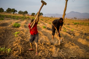 A child and adult working on a tobacco field in Malawi