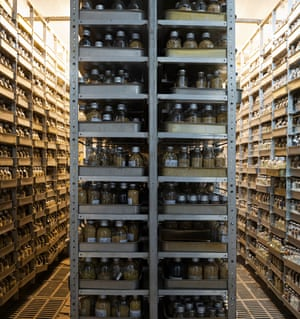 A seed vault at Kuban experimental station in Russia where Doherty found shelves of jars each containing different varieties of soya bean seeds