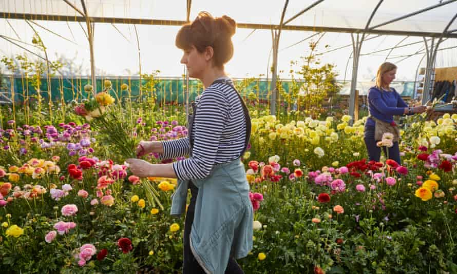 Pickers at the Electric Daisy Flower Farm.