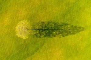 Spring Maple Tree Shadow, Weybridge, Vermont