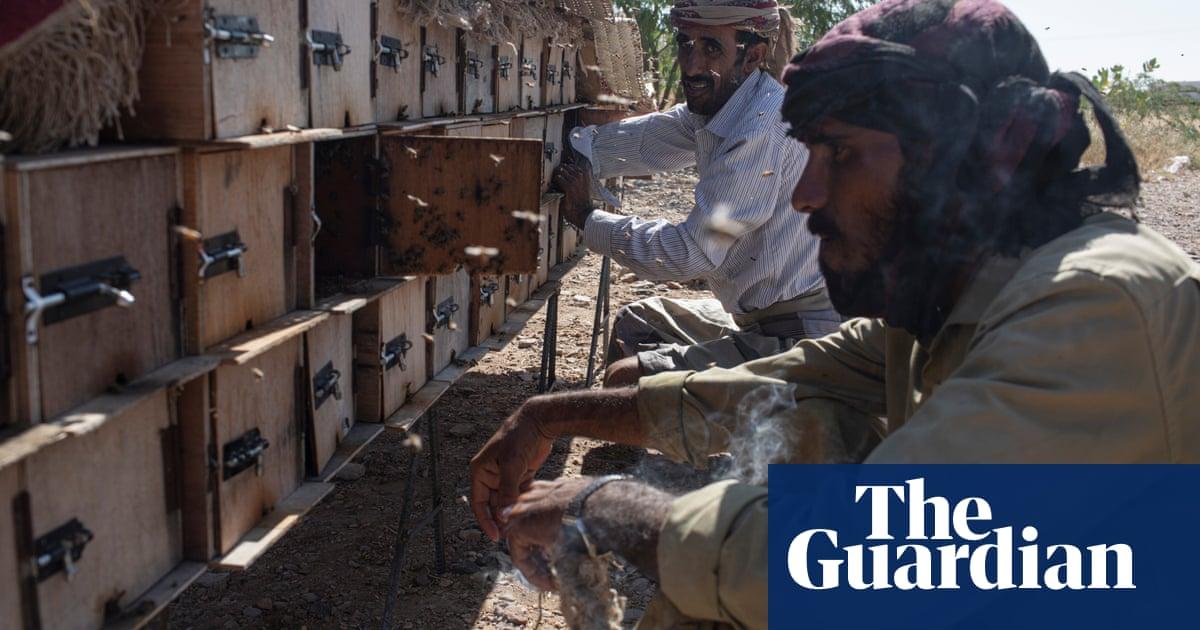 Liquid gold: beekeepers defying Yemen war to produce the best honey