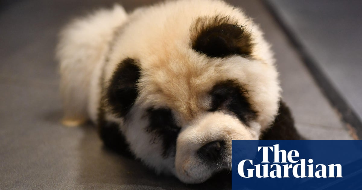 Chinese cafe featuring dogs dyed to look like pandas facing backlash