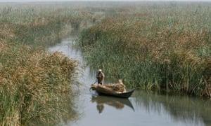 A marsh Arab man paddles a boat loaded with reeds at the Chebayesh marsh in Nassiriya, Iraq.
