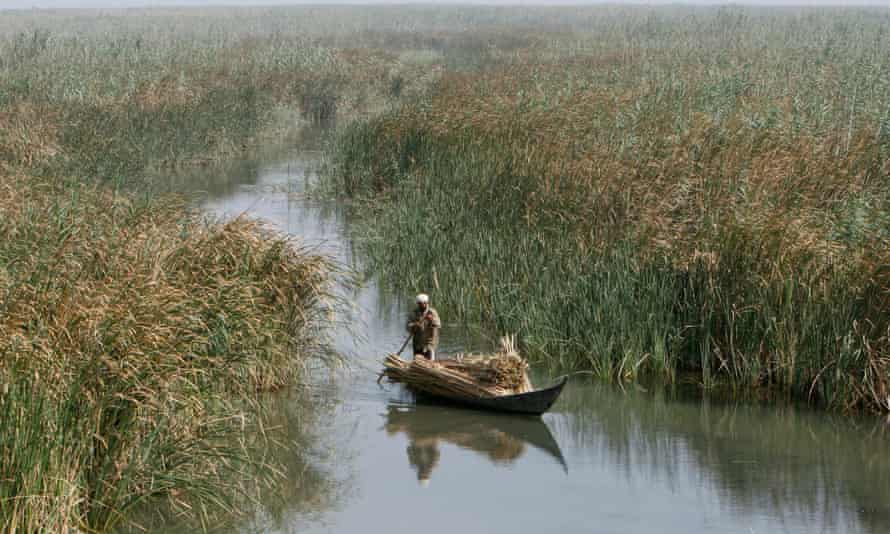 A marsh Arab man paddles a boat loaded with reeds at the Chebayesh marsh in Nassiriya, Iraq.