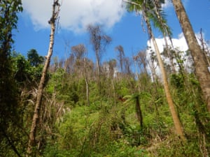 rainforest in Japoon national park