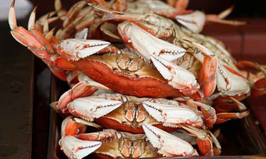 Dungeness crabs are shown for sale at Fisherman's Wharf in San Francisco.