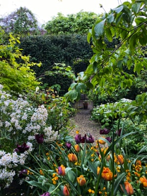 Tulips bring contrasting colours to Nigel Slater's place of retreat.