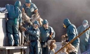 Workers carry ducks before placing them in a bin filled with carbon dioxide at a poultry farm in Latrille, south-west France.
