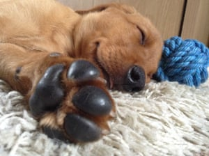 Hugo the labrador retriever has won first place in the I love dogs because… (under 18) category, with the award taken by Jade Hudson from the UK