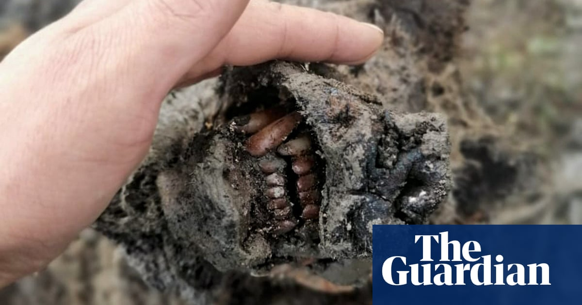 Remains of ice age cave bear found preserved in Russian Arctic