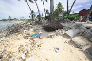 Coconut palms on the eroded foreshore at South Majuro, Marshall Islands, Pacific Ocean – taken on a Greenpeace tour aimed at highlighting overfishing in the region