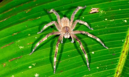 Plenty of creepy-crawlies: Rundell's four youngsters face all manner of challenges in the Amazon.