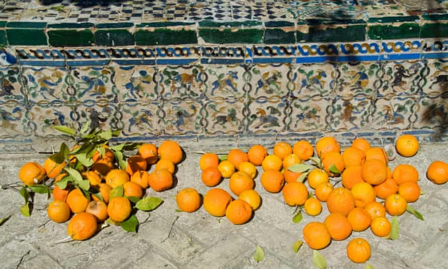 Ripe oranges removed from trees in the gardens of the Real Alcazar.