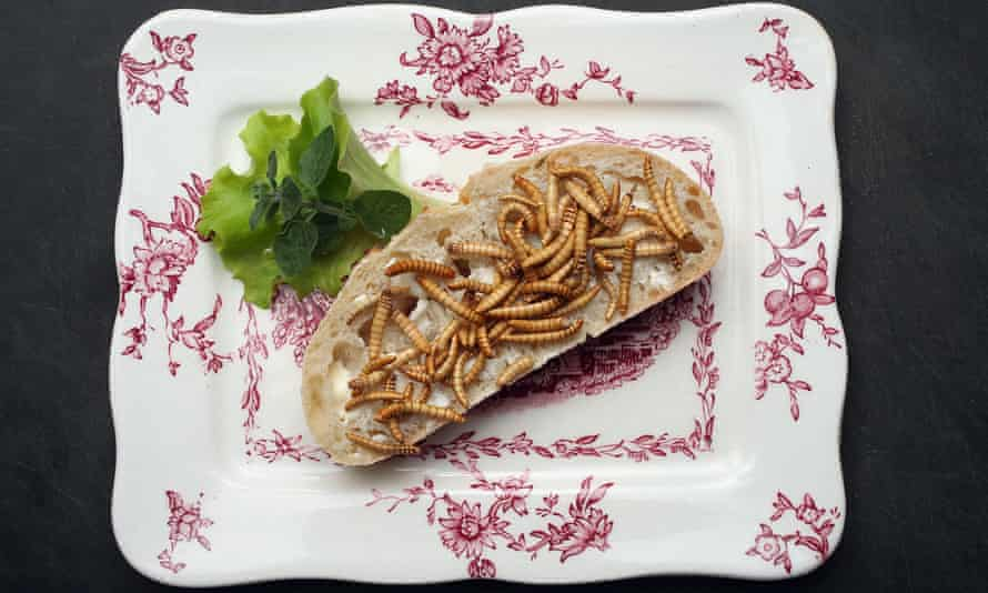 Dried mealworms on a slice of bread
