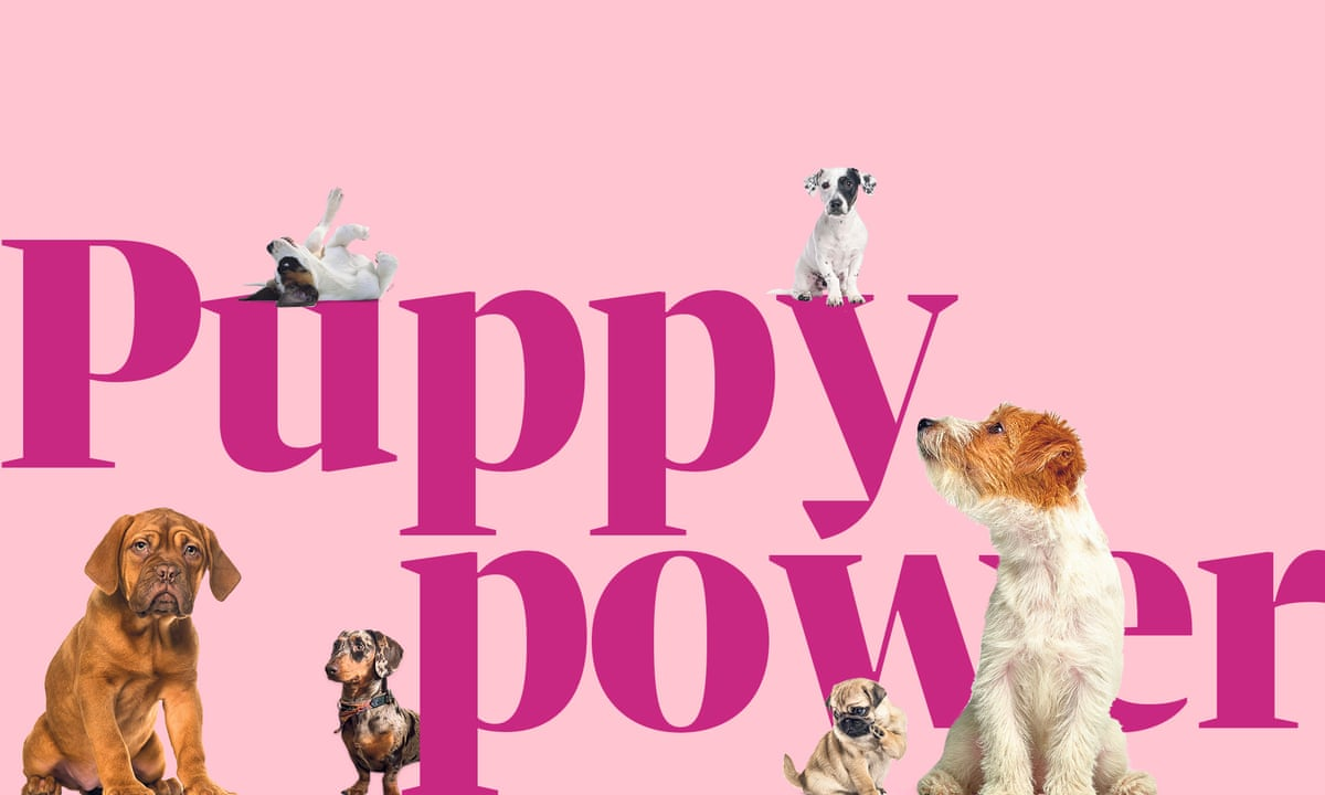 Puppy Power The Costs And Pitfalls Of Buying A Dog Consumer Affairs The Guardian