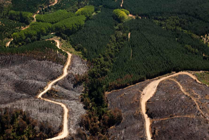The destructive results of a forest fire started by Mapuche radical groups.