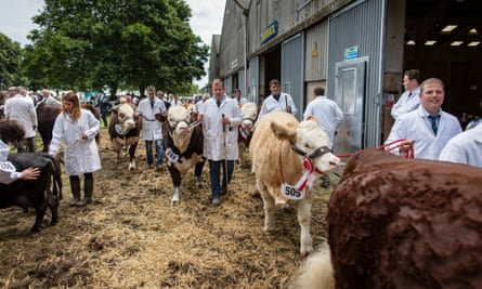 Entrants in the cattle Ring at the Royal Norfolk Show last week.