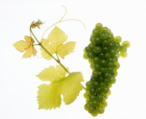 Vineyard tour and tasting with lunch, £49Make sure you get the plus-one invitebuyagift.co.uk
