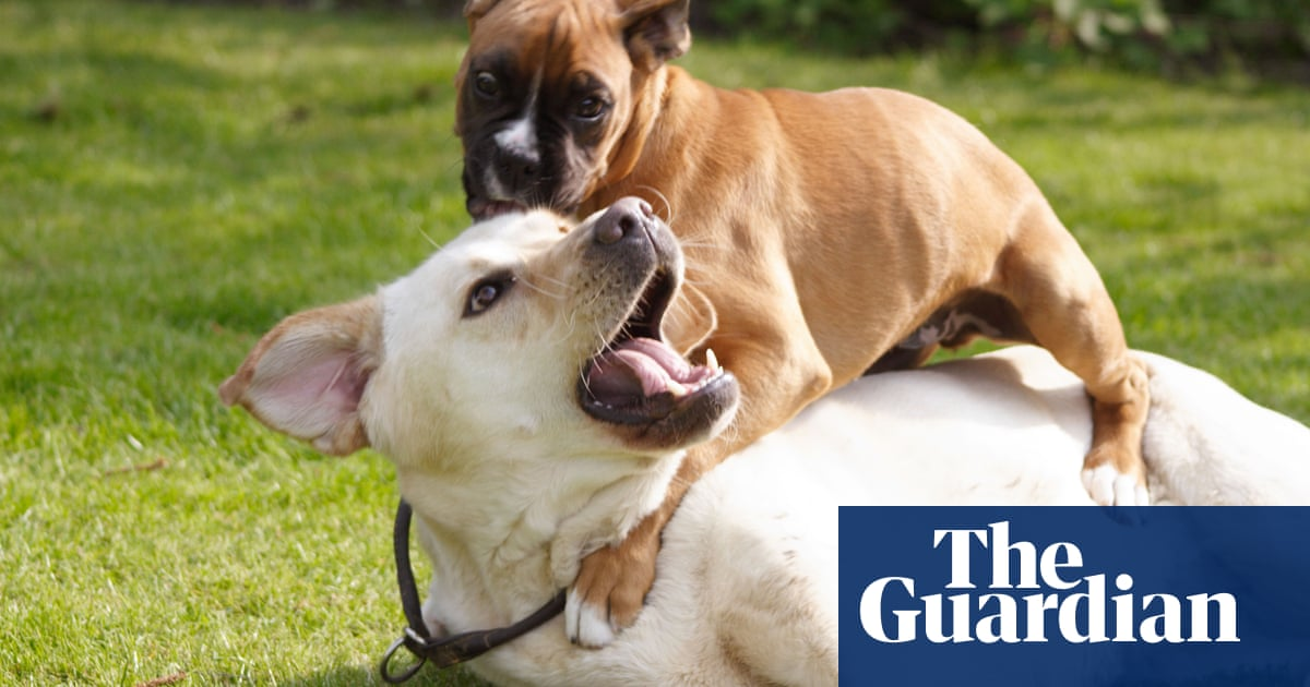 Tim Dowling: we're looking after a puppy. It's riding our dog
