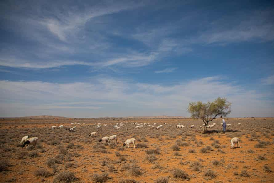 Abduallhi Isa Hamdulle, 81, stands with his sheep and goats in a rural part of Somaliland