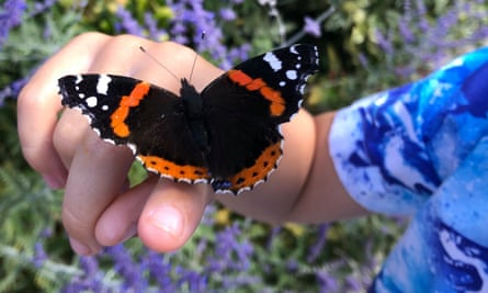 Katie Lingwood in St Albans captured the moment a butterfly landed on her son Jay's hand