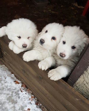 The puppies a day before an avalanche buried the Rigopiano hotel.